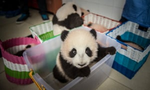 China's Giant Panda Research Center