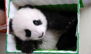 China's Giant Panda Research Center.