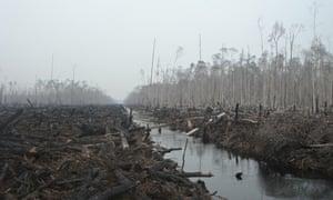 Indonesia Logging