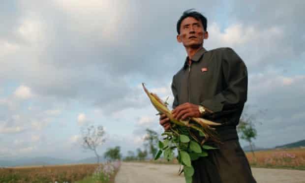 North Korea food farmer