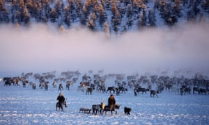 E'ven herders with their reindeer at their winter pastures near Verkhoyansk. Yakutia, Siberia,