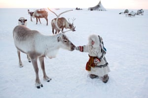 Nenya Vanuito, a 2 year old Nenets girl, approaches a reindeer at her family's winter camp on the tundra near Tambey. Yamal Peninsula, Western Siberia, Russia.