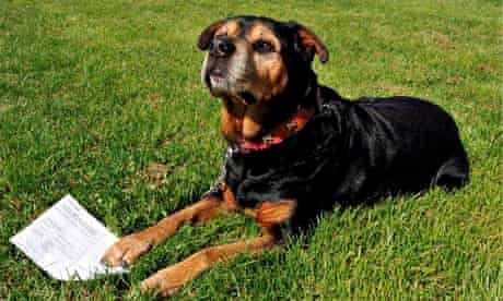 Dog owner faces jail for allegedly registering rottweiler to vote