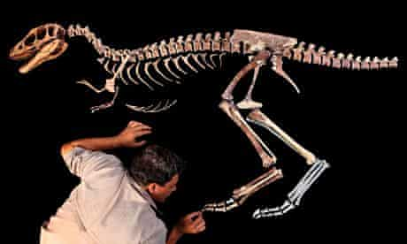 dinosaur Raptorex American Association for the Advancement of Sciencea q