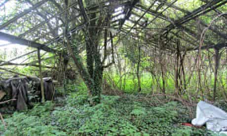 Overgrown greenhouse/building structure at Heathrow