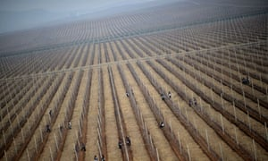 North Korean workers on an apple farm near Pyongyang in April, 2012.