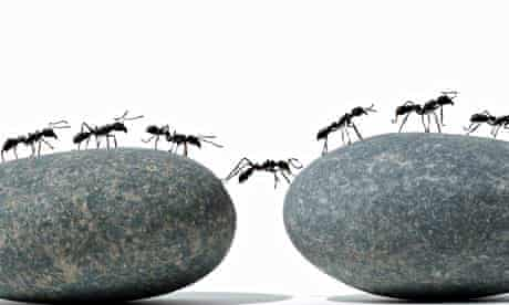 ants team