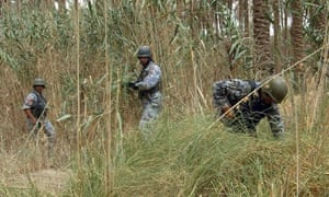 Iraqi security forces search in palm grove