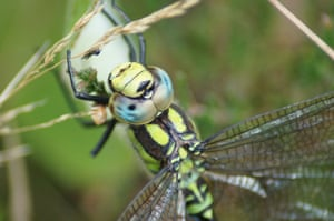 hawker dragonfly by  A-J Thursby