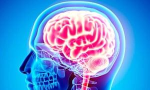 Human brain, computer artwork.