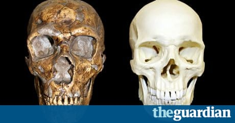 neanderthals were not less intelligent than modern humans, Skeleton