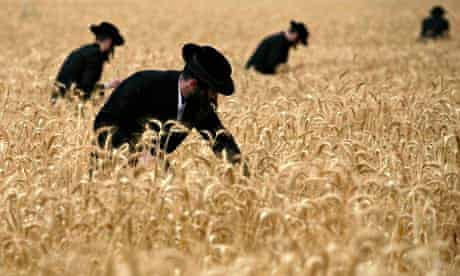 Ultra-Orthodox Jewish men harvest wheat in a field near the Jewish settlement of Mevo Horon