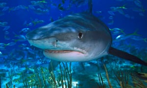 Sharks more evolved than thought, fossil discovery shows