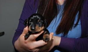 Mini Winnie cloned dog