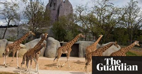 Paris Zoo To Reopen After A 133m Revamp And Grand Rocher