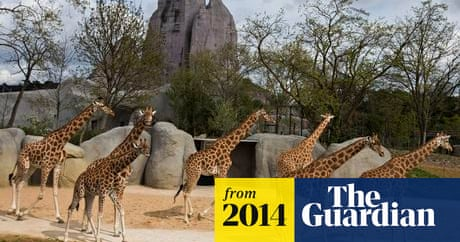 Paris Zoo To Reopen After A 133m Revamp And Grand Rocher Facelift Paris The Guardian
