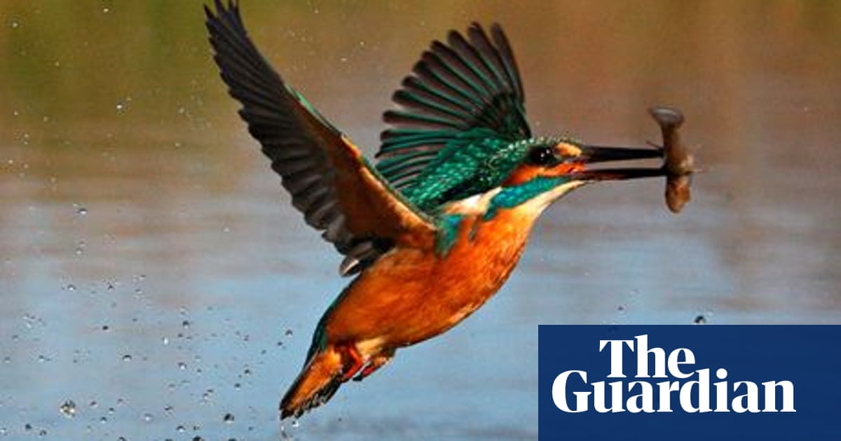 Kingfisher Pioneers Environmental Philosophy Guardian Sustainable Business The Guardian