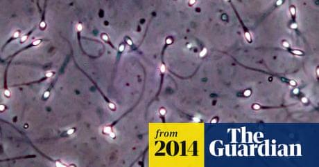 newcastle-university-stem-cell-sperm