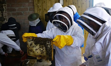 Live Better: Bees and Katherine
