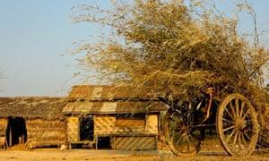Farm in Thilawa