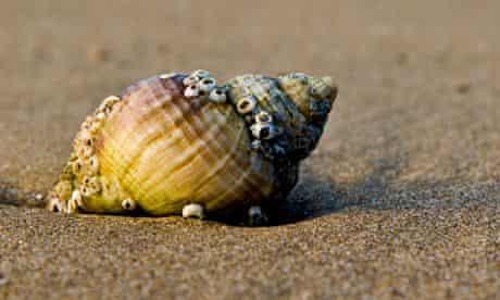 shell shore sand