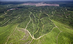 A Wilmar palm oil plantation in Sumatra, Indonesia