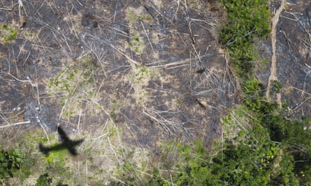 Aerial photograph showing rainforest close to the city of Altamira.  A Greenpeace team is in the area to witness the