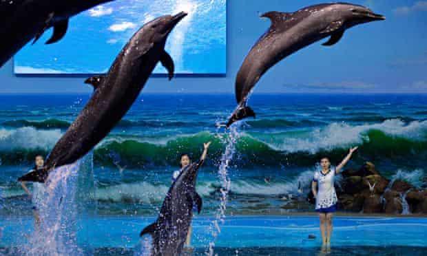 North Korea dolphin trainer