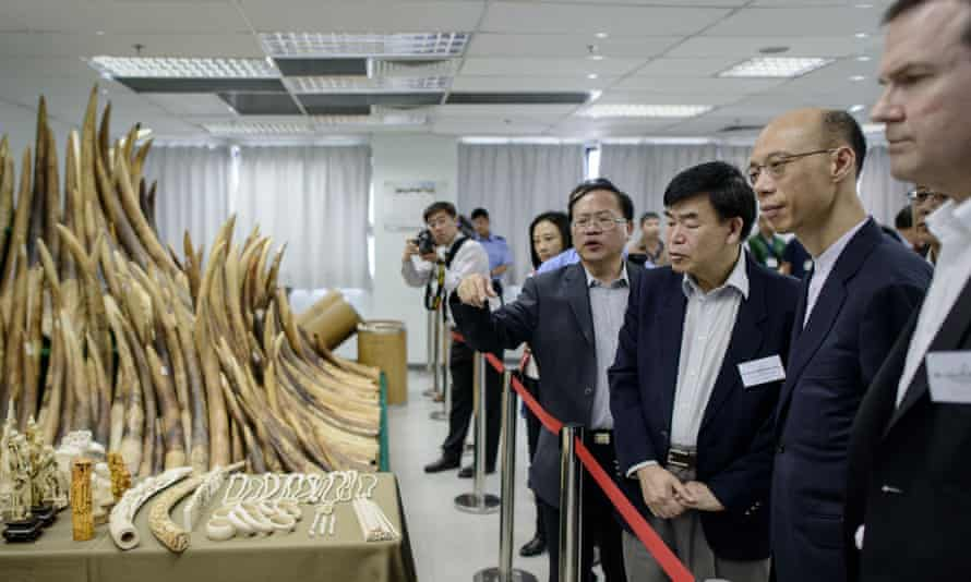 Officials and guests including Hong Kong Secretary for the Environment Wong Kam-sing (second right) are shown seized ivory displayed in Hong Kong on 15 May, 2014