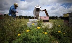 Beekeepers in Homestead, Florida