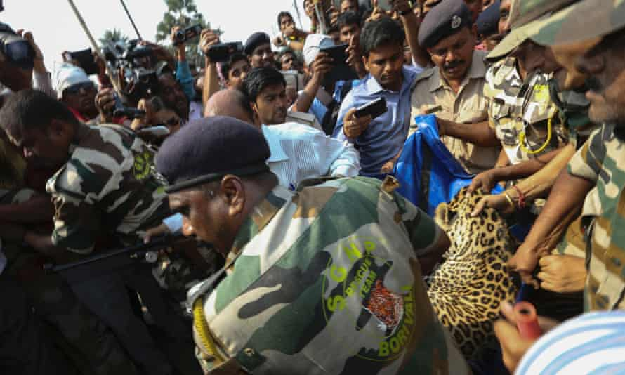 Officials from Sanjay Gandhi National Park rescue team carries a captured  leapord after the rescue operation at a residential area in Vasai, near Mumbai, India, 05 March 2014. According to reports, the officials succeeded after several hours in tranquilizing the leopard and later taken to Sanjay Gandhi National Park.