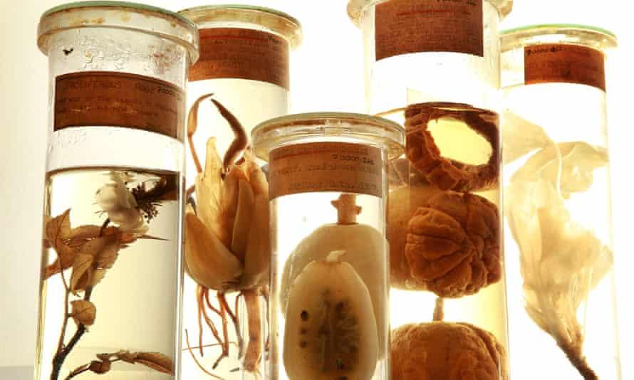 Plant specimens preserved in alcohol at The Royal Botanic Gardens, Kew.