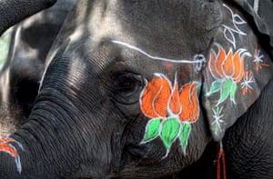 Ear, ear! An elephant is decorated with Bhartiya Janta Party symbols near the BJP headquarters in New Delhi