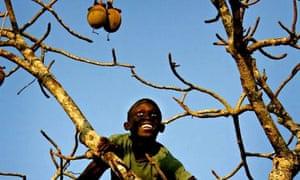 Boy in baobab tree, Senegal