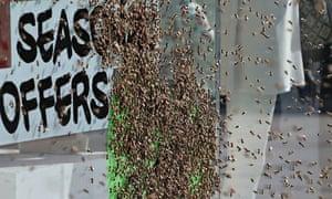 5,000 honeybees nest in Topshop window, central London