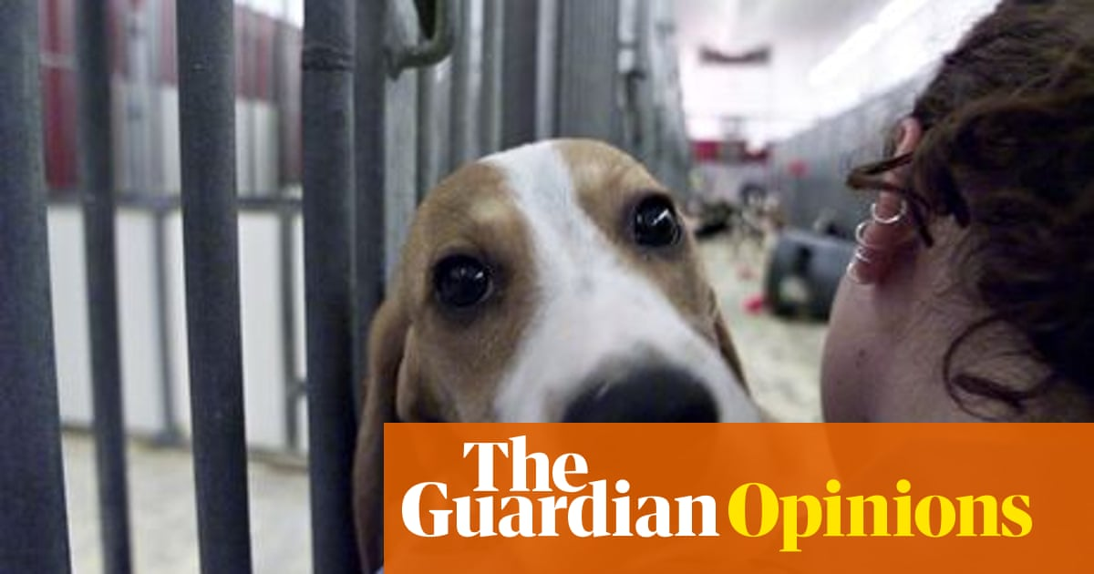 International Auto Show >> Animal testing should not be shrouded in secrecy. We need real reform now | Ann Widdecombe ...