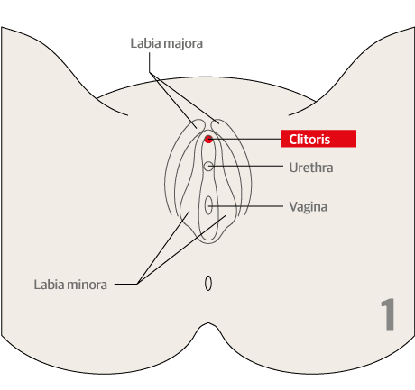 female genital mutilation male circumcision