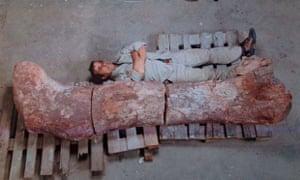 new dinosaur argentina