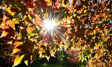 What every leaf knows –how to turn sunlight, CO2 and water into biomass.