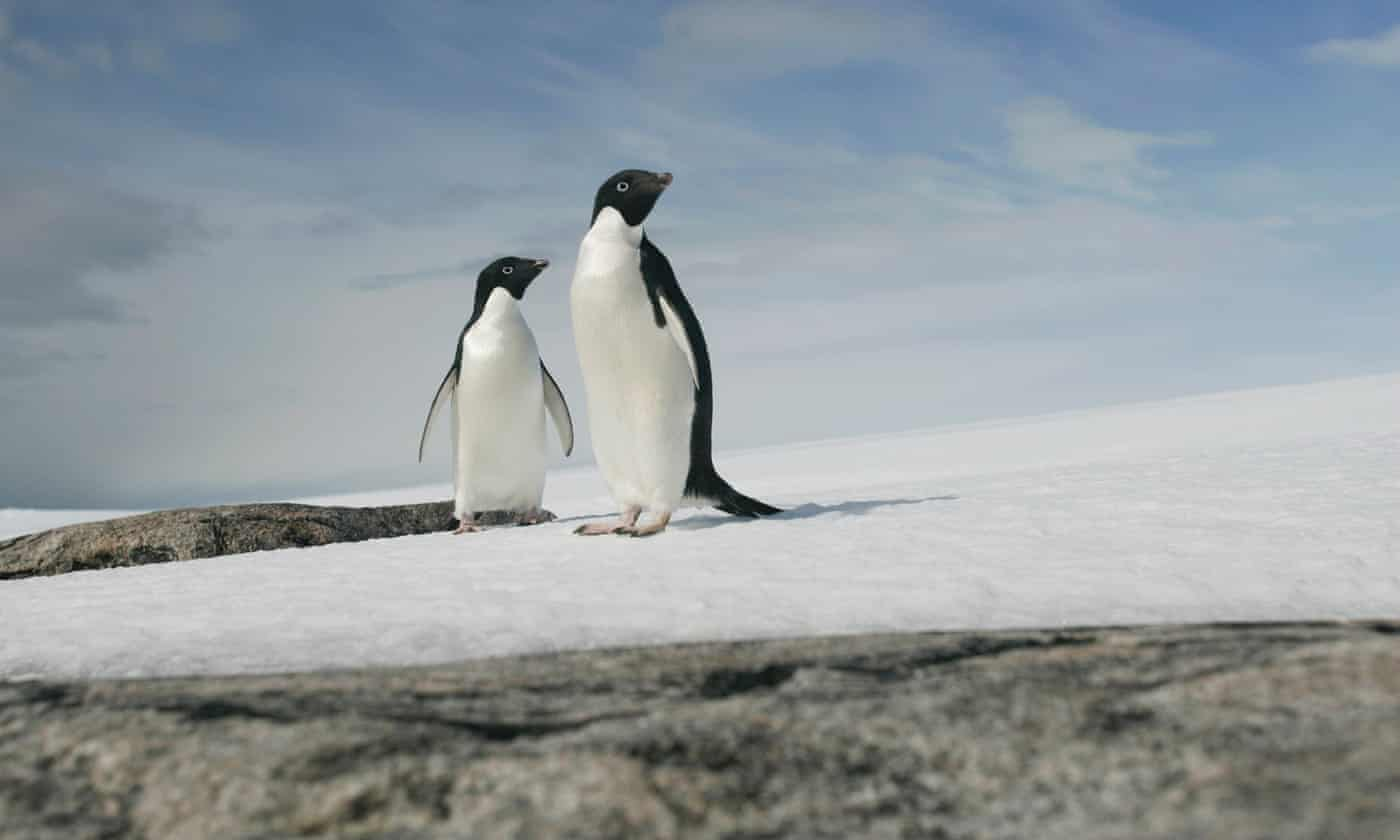 Doubling of Antarctic ice loss revealed by European satellite