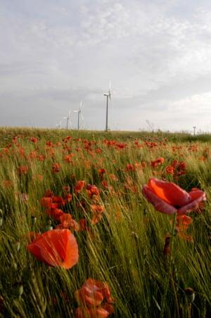 Poppies in a windfarm in La Muela, Spain