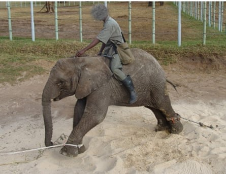 Elephants being abused at Elephants of Eden/Knysna Elephant Park in South Africa