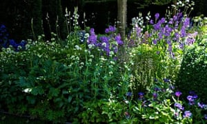 Garden blog: Centtaurea montana 'Album' and Camassia leichtlinii semi-plena