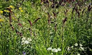 Garden blog: Melica uniflora var. albida and Lysmachia combo