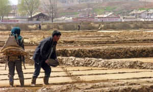 North Korean co-operative farm workers prepare fields for rice planting near Sariwon city.