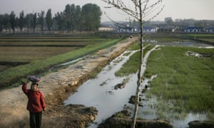 A North Korean woman carries her belongings on her head as she walks through green rice paddies on the outskirts of Pyongyang.