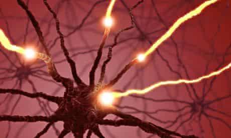brain neurons pulses