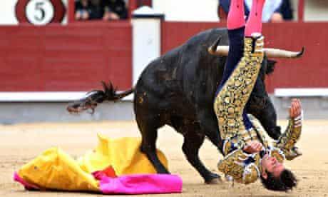 Spanish matador David Mora is gored