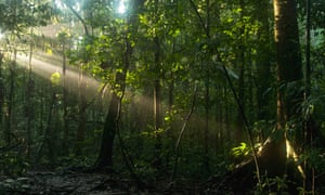 More than 45% of the Yasuni national park is overlapped by oil concessions.