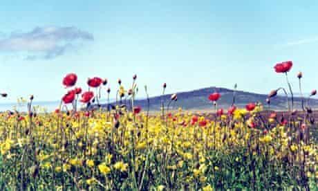 Machair wildflowers